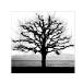 giovanni-lunardi-albero-losanna