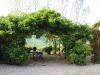 06-ivy-framed-terrace