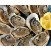 August 5, 2018 National Oyster Day