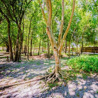 4411 Proctor Road Sarasota Florida