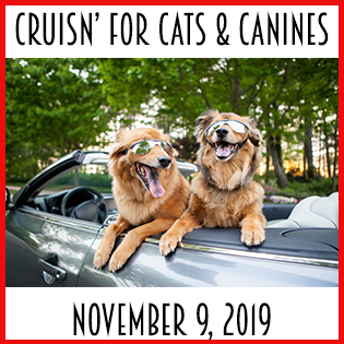 Cruisn' for Cats and Canines